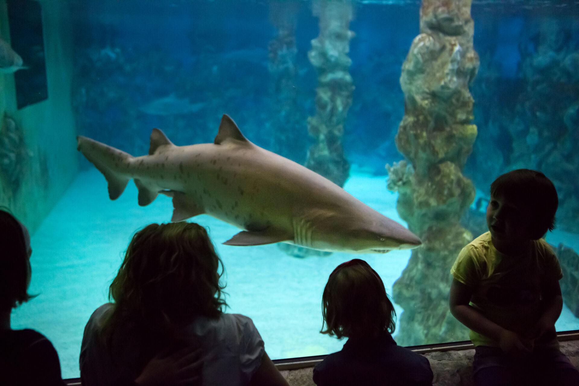 Erlebnispark Meeresaquarium in Zella-Mehlis unterstützt die HSG Suhl